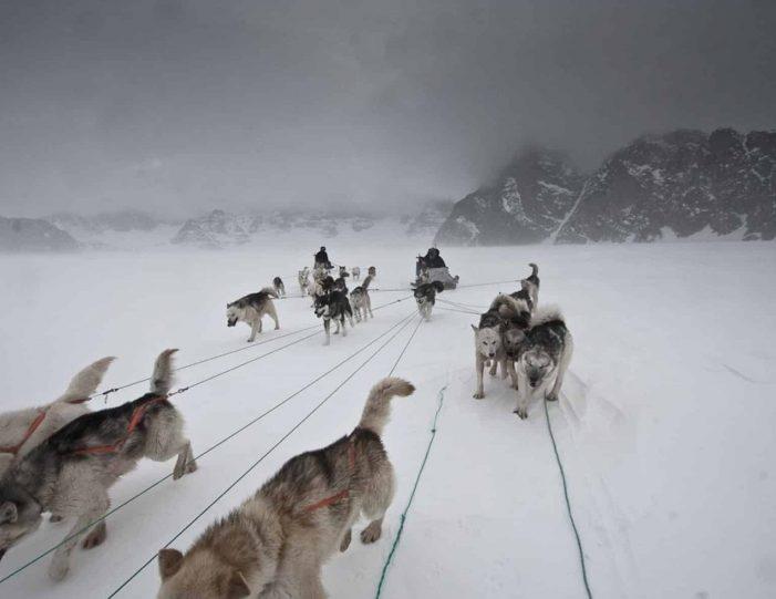 arctic-wildlife-safari-8-days-ittoqqortoormiit-east-greenland-Guide to Greenland42