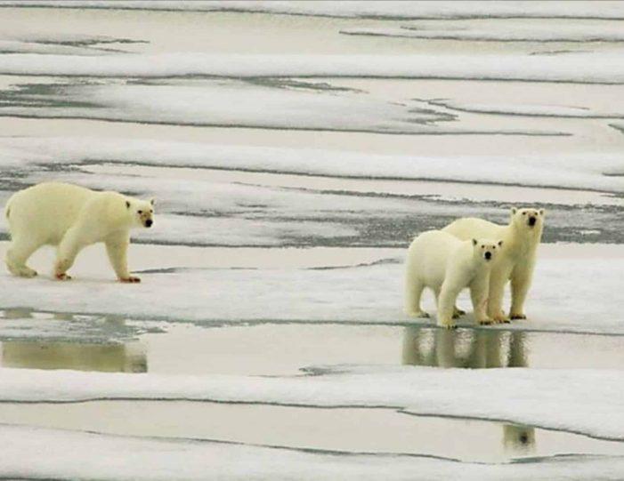 arctic-wildlife-safari-8-days-ittoqqortoormiit-east-greenland-Guide to Greenland5