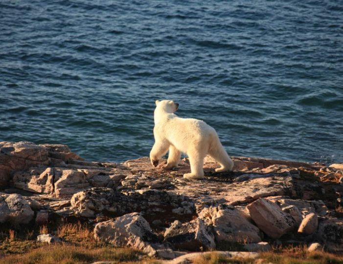 arctic-wildlife-safari-8-days-ittoqqortoormiit-east-greenland-Guide to Greenland6