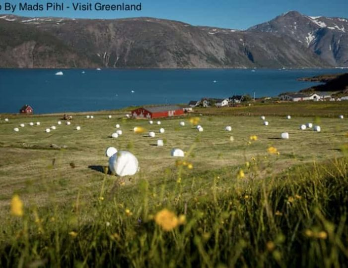 best-of-south-greenland-8-days-narsaq-Guide to Greenland15