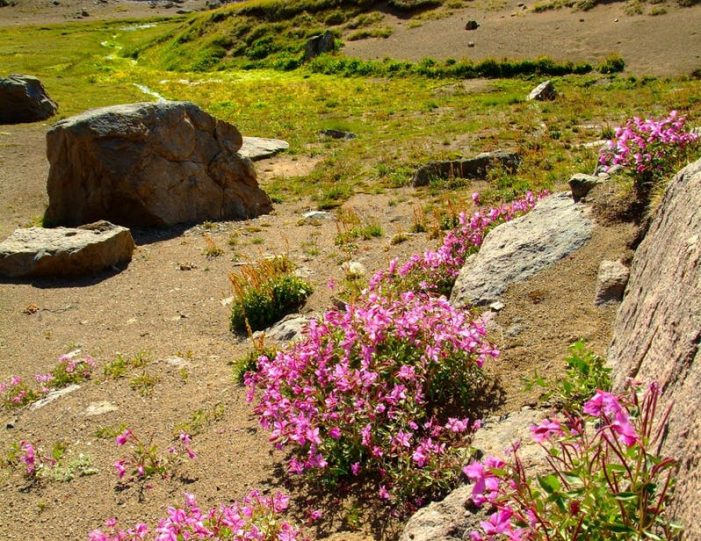 city-tour-and-hike-to-the-flower-valley-tasiilaq-east-greenland - Guide to Greenland4