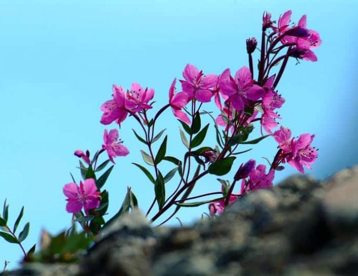 city-tour-and-hike-to-the-flower-valley-tasiilaq-east-greenland - Guide to Greenland6