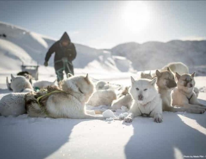 day-of-dogsledding-ilulissat-disko-bay- Guide to Greenland1