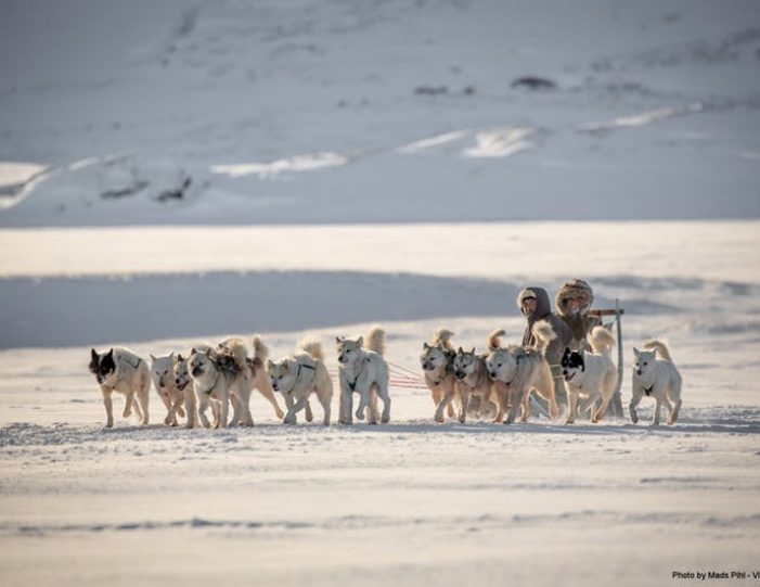 day-of-dogsledding-ilulissat-disko-bay- Guide to Greenland2