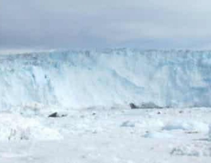 daytour-to-eqi-glacier-ilulissat-disko-bay - Guide to Greenland4