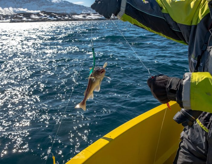 deep-sea-fishing-private-charter-qasigiannguit-disko-bay-Guide to Greenland2