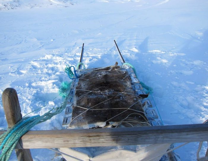 dog-sledding-expedition-kangerlussuaq-to-sisimiut-west-greenland - Guide to Greenland10