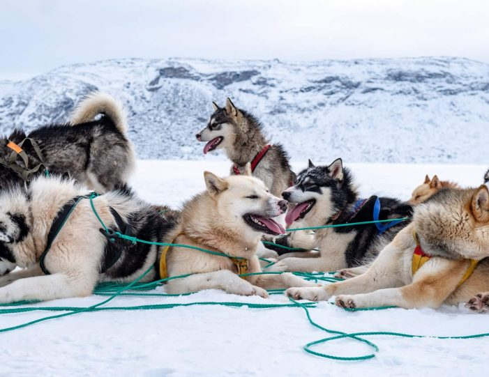 dog-sledding-expedition-kangerlussuaq-to-sisimiut-west-greenland - Guide to Greenland6
