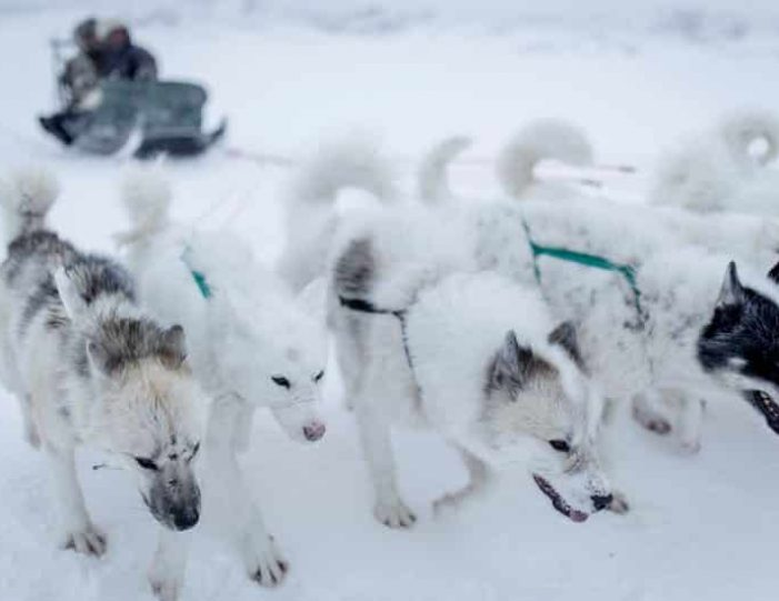 dog-sledding-tour-kangerlussuaq-west-greenland - Guide to Greenland10