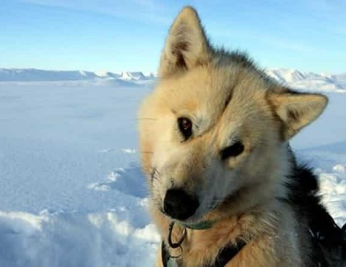 dog-sledding-tour-kangerlussuaq-west-greenland - Guide to Greenland11