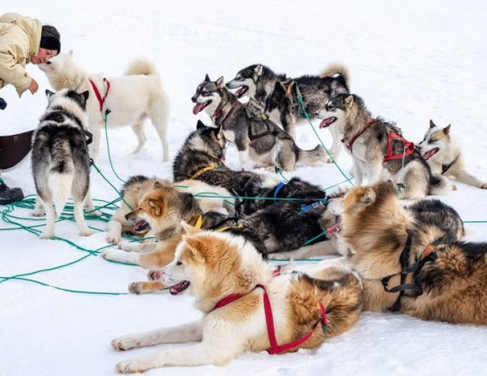dog-sledding-tour-kangerlussuaq-west-greenland - Guide to Greenland4