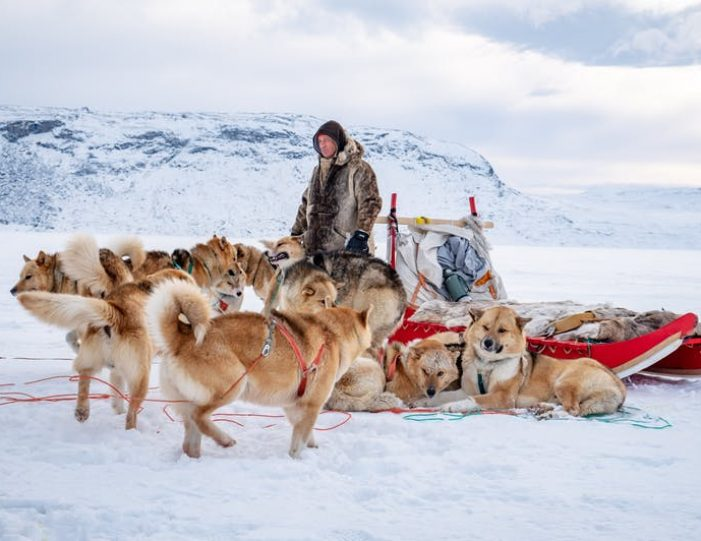 dog-sledding-tour-kangerlussuaq-west-greenland - Guide to Greenland7