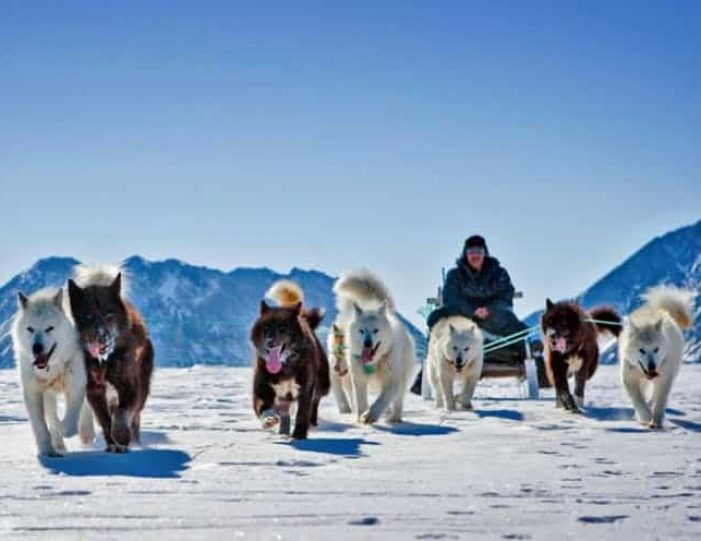 dog-sledding-tour-kangerlussuaq-west-greenland - Guide to Greenland8
