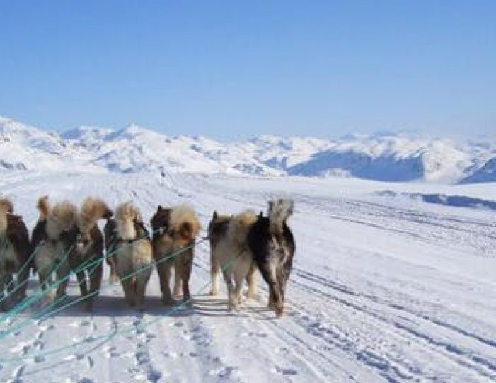 dog-sledding-tour-kangerlussuaq-west-greenland - Guide to Greenland9