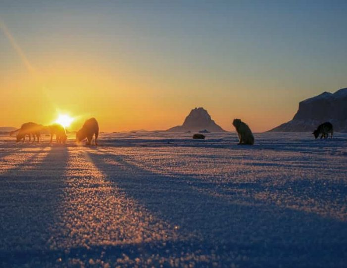 dogsled-expedition-hunting-and-fishing-on-sea-ice-uummannaq-north-greenland-Guide to Greenland12