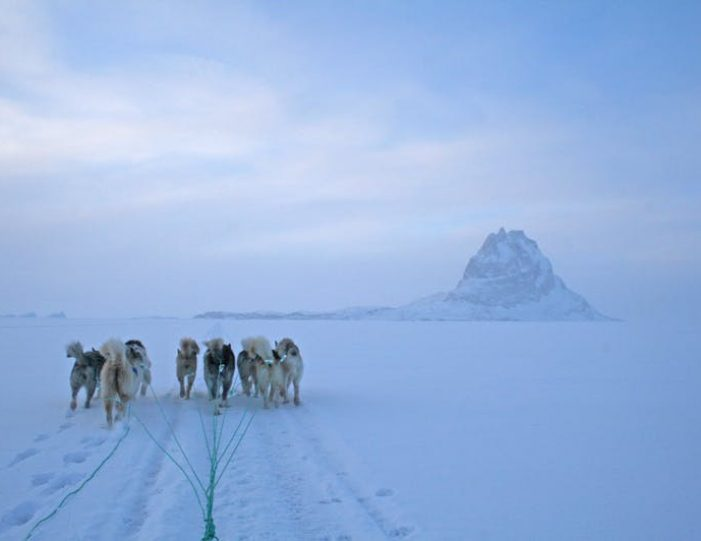 dogsled-expedition-hunting-and-fishing-on-sea-ice-uummannaq-north-greenland-Guide to Greenland20