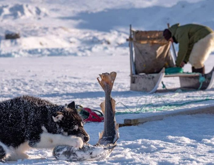 dogsled-expedition-hunting-and-fishing-on-sea-ice-uummannaq-north-greenland-Guide to Greenland6