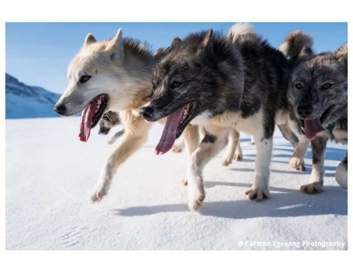 dogsled-expedition-to-settlements-uummannaq-north-greenland-Guide to Greenland18