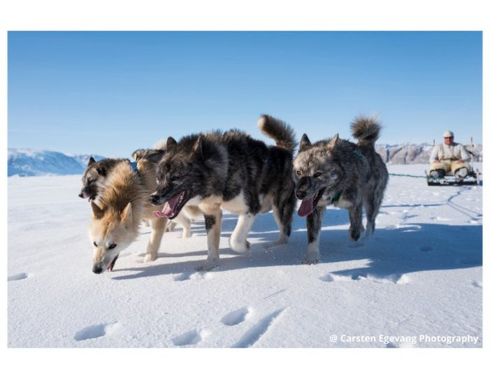 dogsled-expedition-to-settlements-uummannaq-north-greenland-Guide to Greenland2