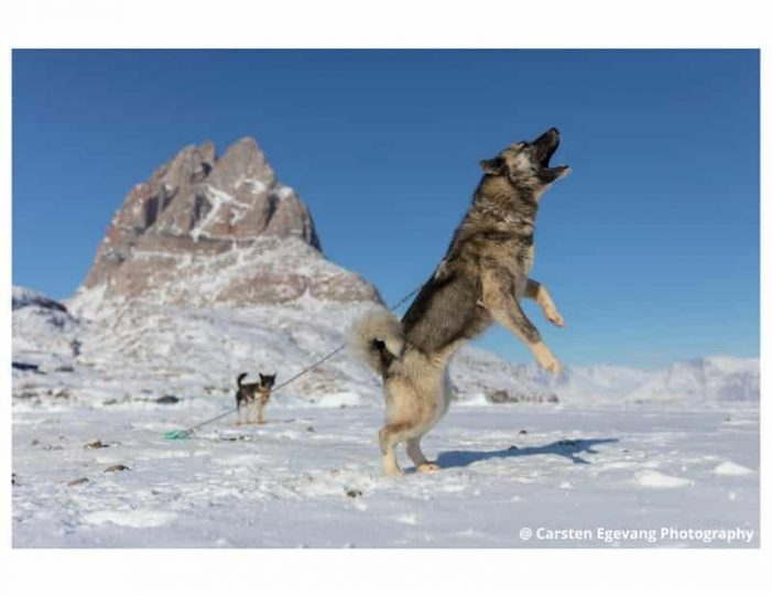 dogsled-expedition-to-settlements-uummannaq-north-greenland-Guide to Greenland9