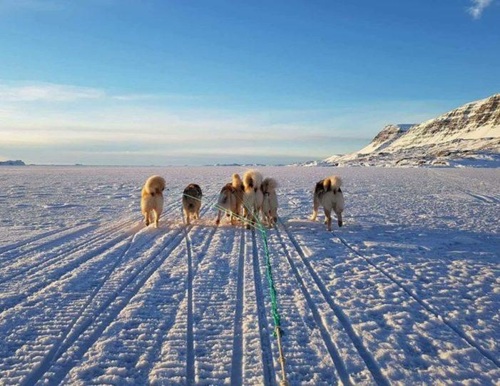 dogsledding-5-hours-qeqertarsuaq-disko-bay-Guide to Greenland6