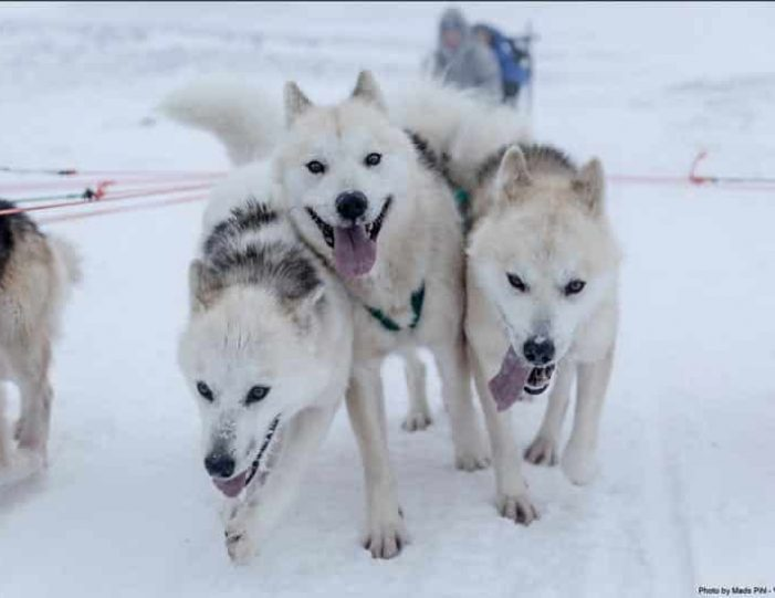 expedition-on-dogsled-2-days-ilulissat - Guide to Greenland1