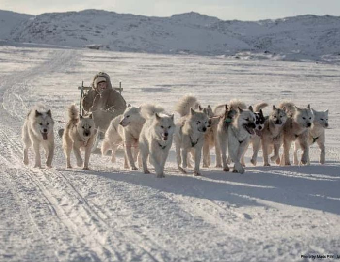 expedition-on-dogsled-2-days-ilulissat - Guide to Greenland10