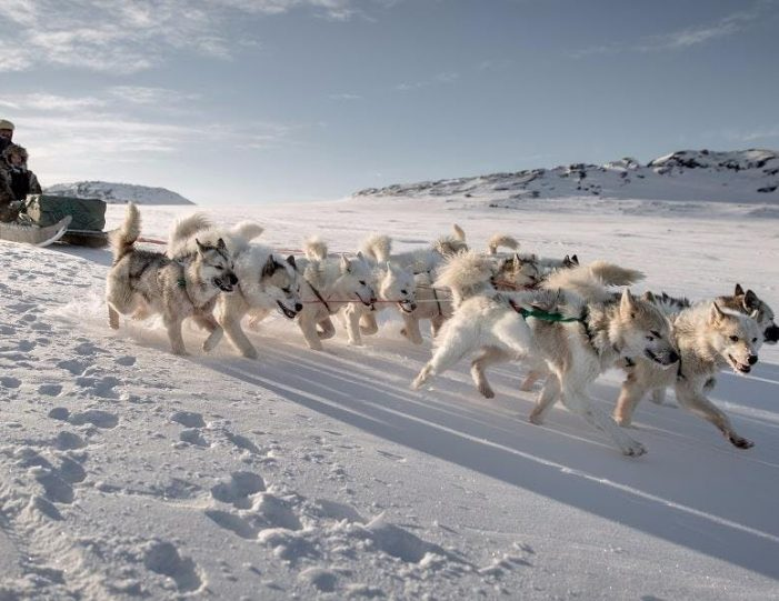 expedition-on-dogsled-2-days-ilulissat - Guide to Greenland2