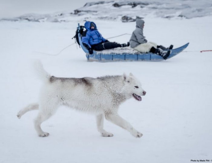 expedition-on-dogsled-2-days-ilulissat - Guide to Greenland7