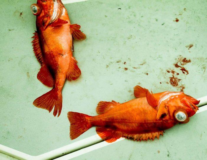 fish-n-dish-qooqqut-nuan-nuuk - Guide to Greenland1