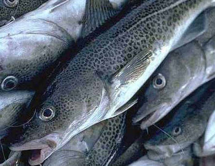 fishing-for-cod-nuuk - Guide to Greenland1