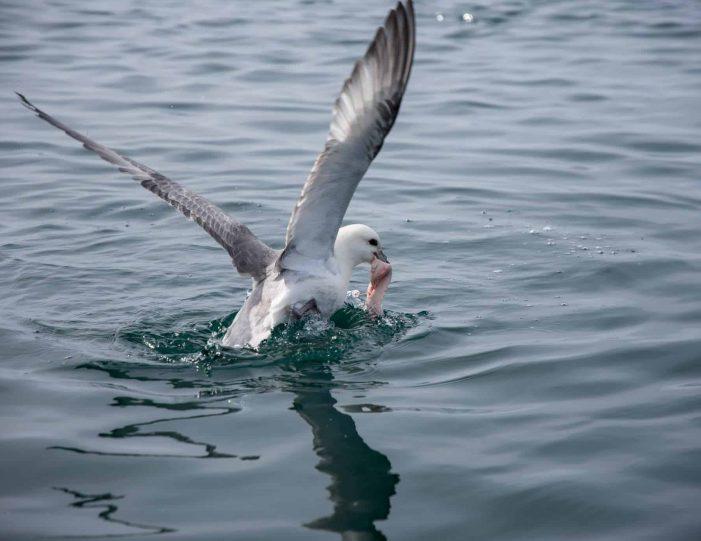 fishing-tour-ilulissat-disko-bay - Guide to Greenland11