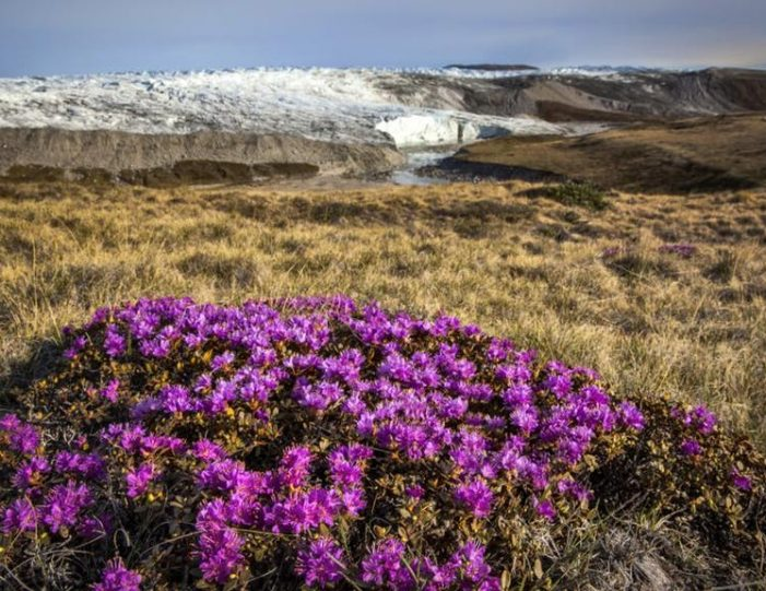 full-day-adventure-on-greenland-ice-sheet-kangerlussuaq-west-greenland - Guide to Greenland8