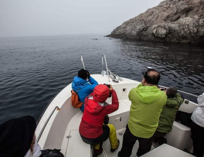 ghost-village-boat-cruise-sisimiut-west-greenland - Guide to Greenland8