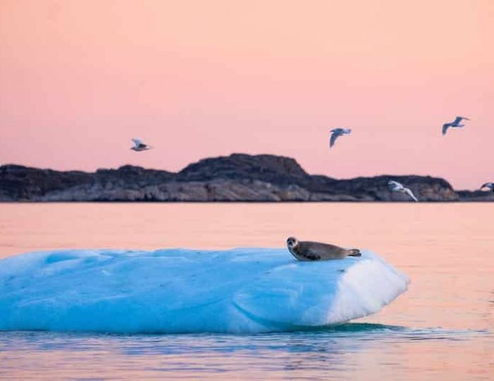 gift-card-for-all-tours-in-greenland-Guide to Greenland1
