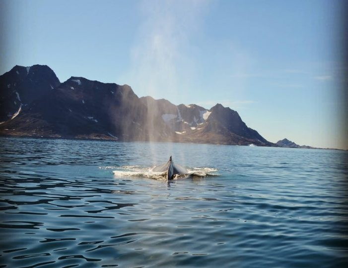glacier-adventure-by-boat-tasiilaq-east-greenland - Guide to Greenland9