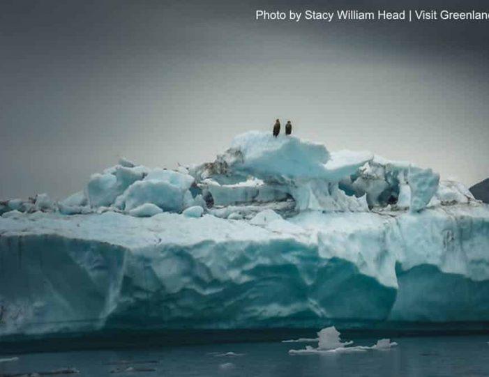 glacier-cruise-qaqortoq-south-greenland- Guide to Greenland2