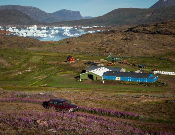glacier-landing-by-helicopter-qaqortoq-south-greenland - Guide to Greenland4