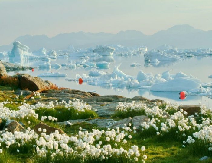 highlights-of-south-greenland-8-days-Guide to Greenland20