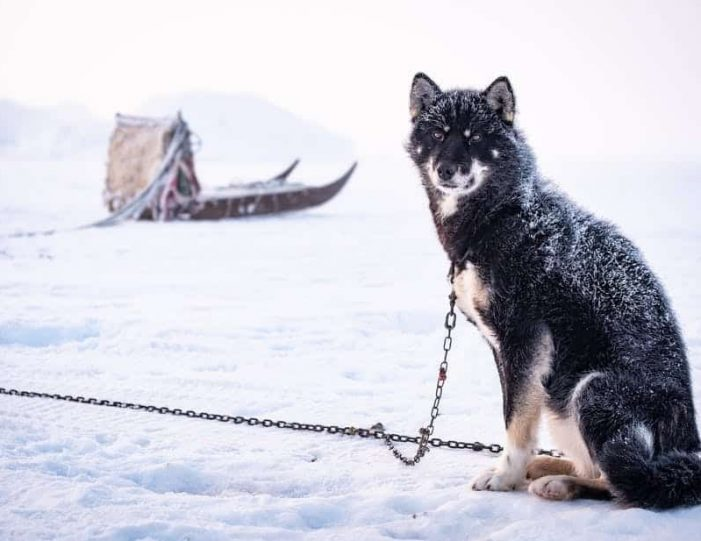 highlights-of-the-arctic-winter-in-5-days-ilulissat-disko-bay-Guide to Greenland4