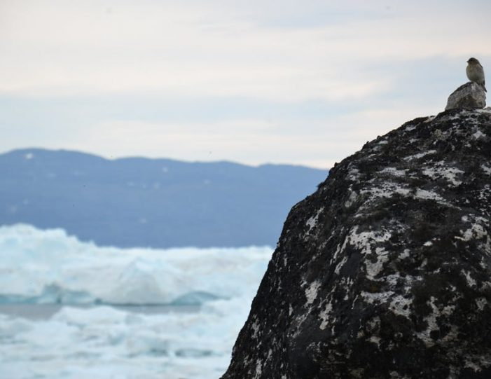 hike-along-the-icefjord-ilulissat-disko-bay-Guide to Greenland (5)