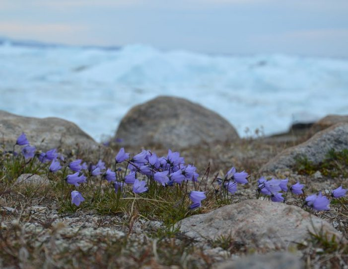 hike-along-the-icefjord-ilulissat-disko-bay-Guide to Greenland (6)
