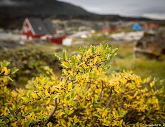 hike-cultural-immersion-2-days-ilulissat-disko-bay-Guide to Greenland2