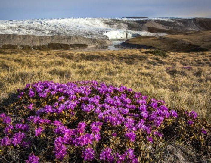 hike-to-garnet-rock-kangerlussuaq-west-greenland-guide to greenland (15)