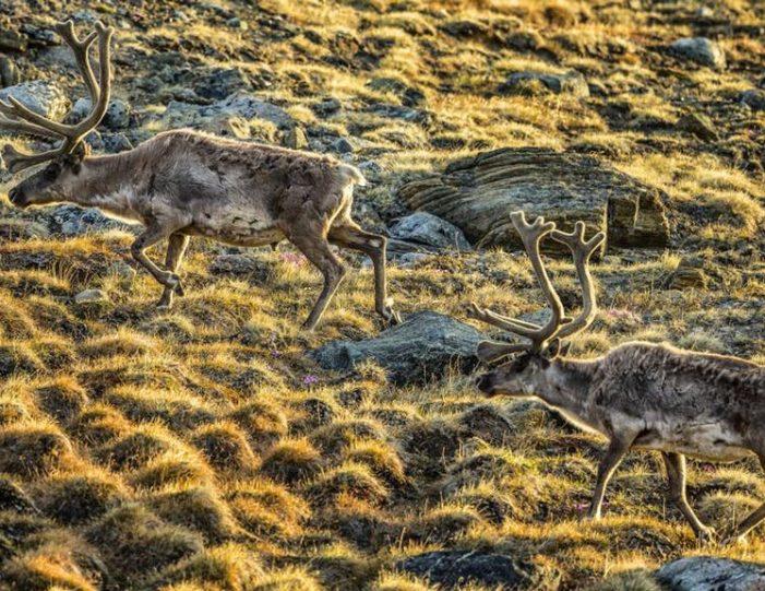 hike-to-garnet-rock-kangerlussuaq-west-greenland-guide to greenland (16)