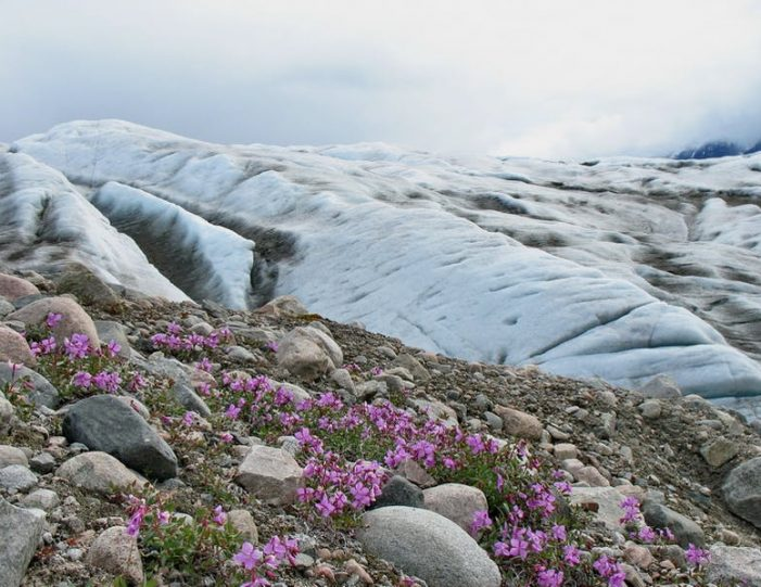 hiking-exploration-8-days-south-greenland-Guide to Greenland17