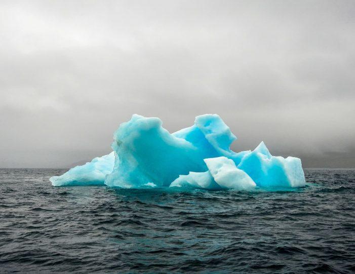 kangersuneq-fjord-safari-private-charter-qasigiannguit-diskobay-Guide to Greenland10