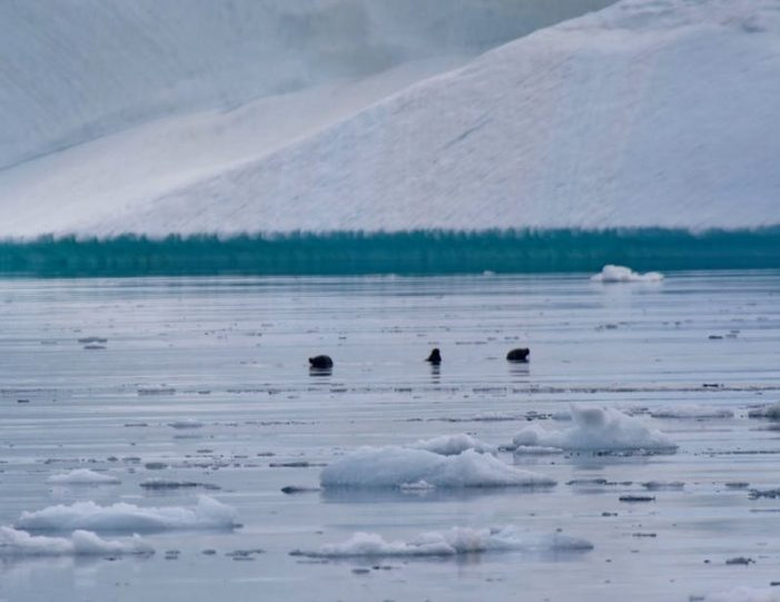 land-of-icebergs-disko-bay-Guide to Greenland11