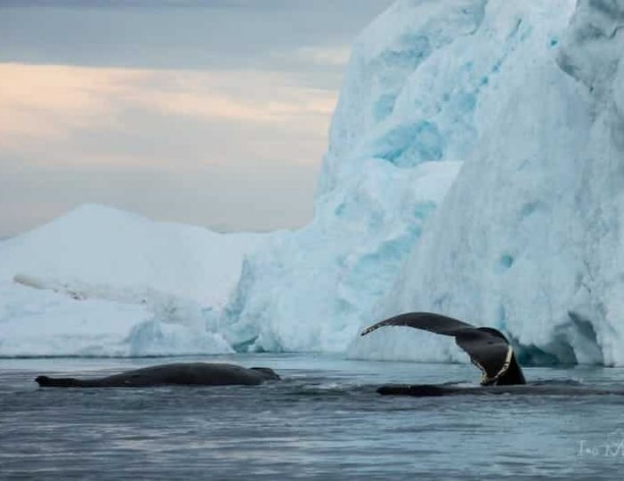 midnight-cruise-to-ilulissat-icefjord-ilulissat-disko-bay - Guide to Greenland (2)