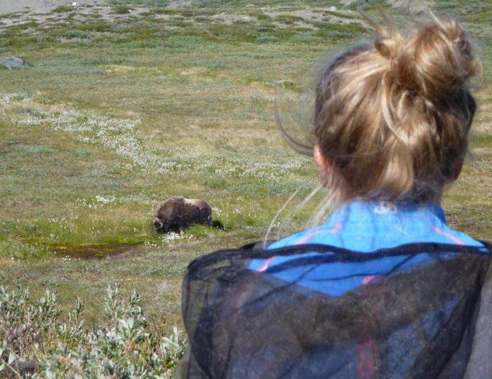 musk-ox-hike-kangerlussuaq-west-greenland-1 - Guide to Greenland (12)